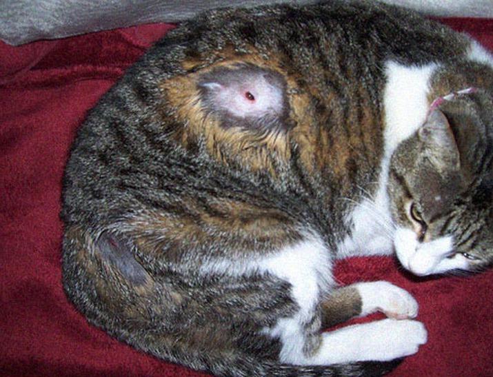 может ли у кошки аллергия на собаку