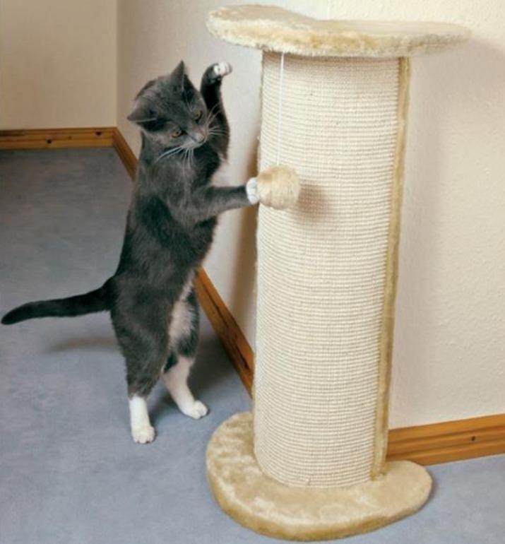 Как сделать что бы кот не хотел кошку 98