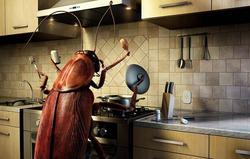 Эффективный способ избавиться от тараканов