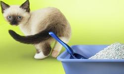 Кошка отказывается ходить в лоток