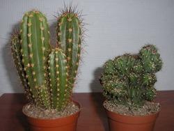 Как выбрать кактус
