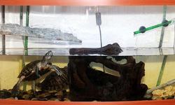 Уход за пресноводными черепахами