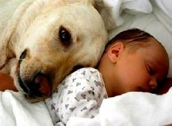 Новорожденный и собака в доме