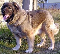 Идеальная собака для дома