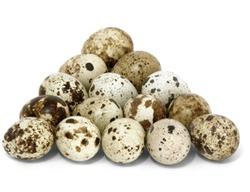 Какую пользу приносят перепелиные яйца