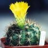 Как добиться цветения кактуса