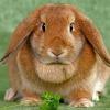 Чем питаются карликовые кролики